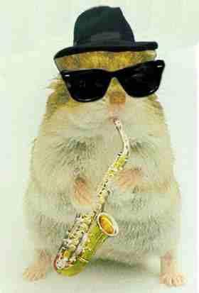 hamster culture Gerbil-Hamster-Jazz